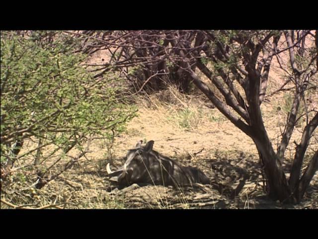 Estufas, neveras y aires acondicionados (Documental Completo)