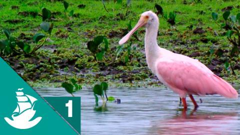 El Pantanal Amazónico ¡Ahora en Alta Calidad! (Parte 1/5)