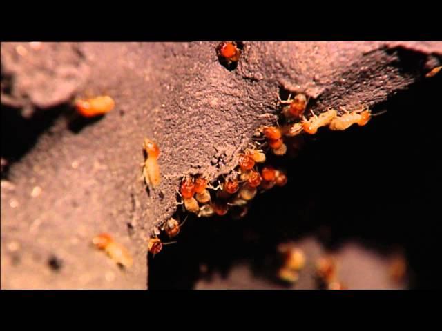 Estufas, neveras y aires acondicionados (Parte 3/3)