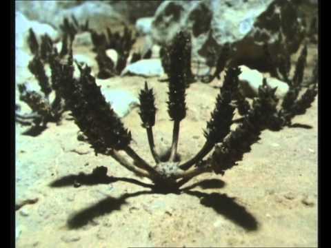 (DOCUMENTAL) Planeta Viviente - 6. Desiertos Abrasadores