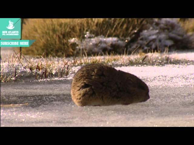 Estufas, neveras y aires acondicionados (Parte 2/3)