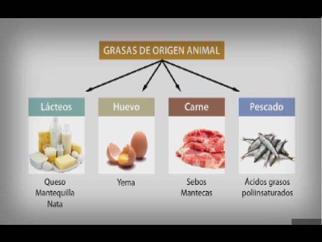 Los lípidos en la alimentación