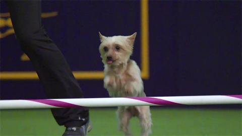 These slow-mo dogs will make your day